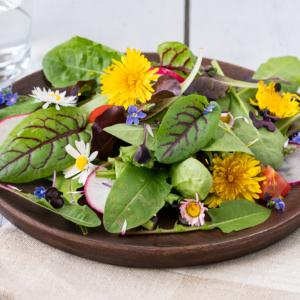 Frühlingssalat mit Löwenzahn
